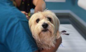 Службы неотложной ветеринарной помощи рассказали, по каким вопросам чаще всего к ним обращаются жители столицы