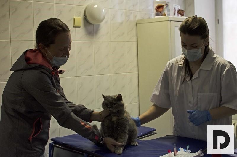 Главный ветврач ЮАО рассказал о ежегодной вакцинации питомцев и новой системе ВетАС