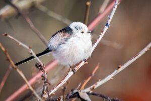 Мосприрода в 2020 году нашла более 40 видов краснокнижных птиц
