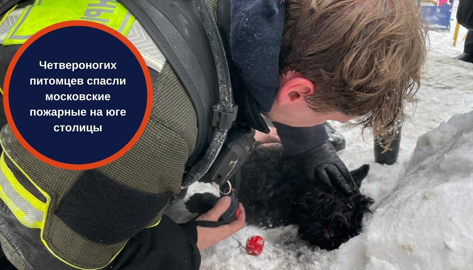 Четвероногих питомцев спасли московские пожарные на юге столицы